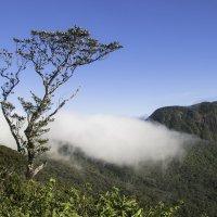 Пик Адама (по дороге с горы ) Шри-Ланка :: Андрей