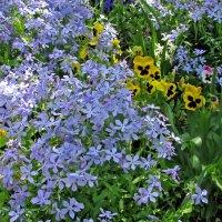 Наш ковёр - цветочная поляна... :: максим лыков