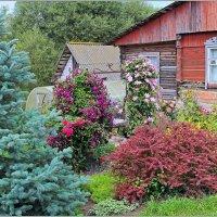 Цветы у дома. :: Роланд Дубровский