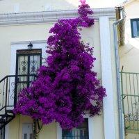 Чудо-дерево... :: Светлана Игнатьева