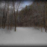 winter forest :: Юлия Денискина