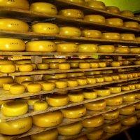 На сырной ферме :: Светлана Щербакова