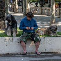 Любитель собак :: Константин Шабалин