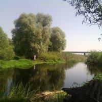 Моё почтение тебе батюшка Битюг река! :: Ольга Кривых