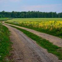 Дорога в лес :: Вера
