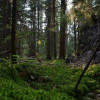 Лесная поляна :: Сергей Щеглов