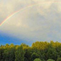 Радуга над лесом :: Анатолий Антонов