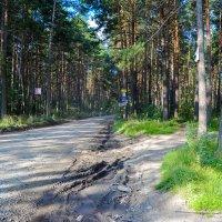 Вход в сказочный лес :: Света Кондрашова
