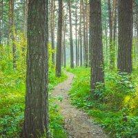 Тропами лесными мы идём гулять :: Света Кондрашова
