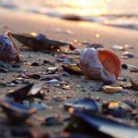 Море, Лето,....... ;) :: Вен Гъновски