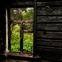 Окно в сад :: andrius A