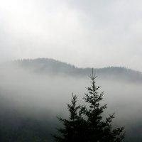 Туман :: Наталья Тимофеева