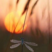 Лишь солнца первые лучи :: Олег Резенов