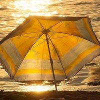 Золотой зонтик :: Albina