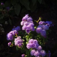 Неизвестные мне цветы :: Андрей Лукьянов