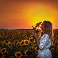 аромат солнца :: Алена Колошва
