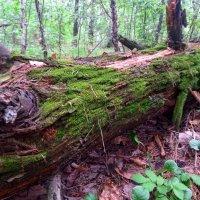 В лесу... :: Евгений Уваров