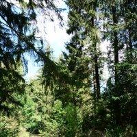 В лесу. :: Paparazzi