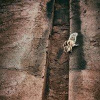 Дикое животное :: Val Савин