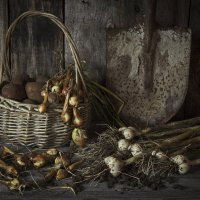 Огородные дела :: Ирина Елагина