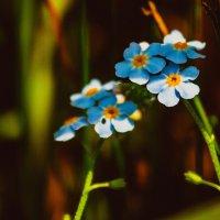 Красота цветочного мира :: Игорь Осипенко