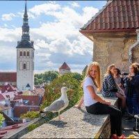 Tallinn, 2016 :: Jossif Braschinsky