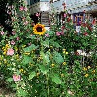 Лето в соседнем дворе :: Нина Корешкова