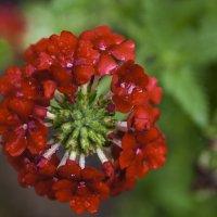 экзотический цветок :: Alla
