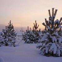 Вечерняя зима :: Галина Подлопушная