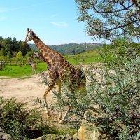 Саванна в пражском зоопарке :: Денис Кораблёв