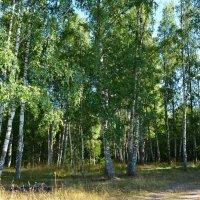 Августовский лес :: Ольга