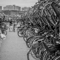 Велостердам :: Sergey Logvenkov