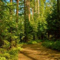 На лесной тропинке летом :: Olcen - Ольга Лён