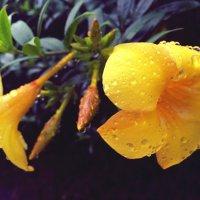 После дождя :: Ирина Бруй