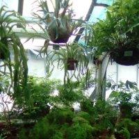 Цветочный уголок в Ботаническом саду. (г. Санкт-Петербург) :: Светлана Калмыкова
