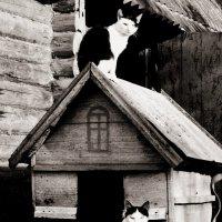 Коты :: Шура Еремеева