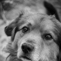 Пёс :: Валерий Саломатин