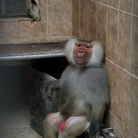 Сухумский обезьянник :: Виолетта