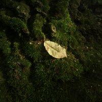 Листок и мох :: Николай Филоненко