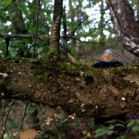 В лесу :: Николай Филоненко