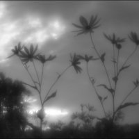 """""""Для кого-то веет ветер свежий, для кого-то нежится закат""""... :: galina bronnikova"""
