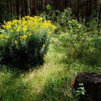 Лесной этюд :: Валерий Толмачев
