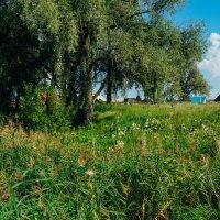Поля,леса и дома :: Света Кондрашова