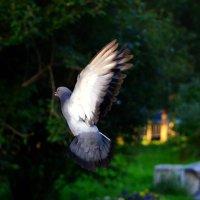 Голуби мира :: Tatyana Nemchinova