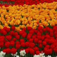 Цветы на ВДНХ :: svk