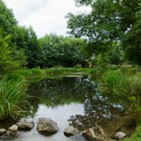 Старый пруд :: Eugen Pracht