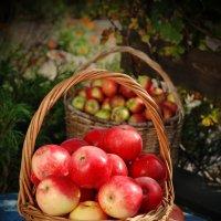 Натюрморт с яблоками :: Валерий Толмачев