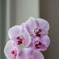 Орхидея :: Waldemar .