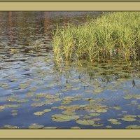Озеро у берега :: Наталья
