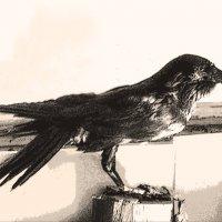 raven :: Юлия Денискина